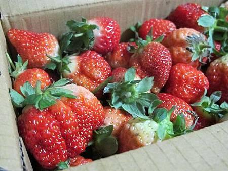 20140104採草莓 (193).jpg