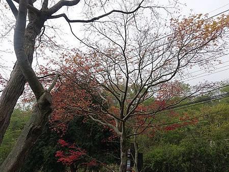 20150321見晴來福居 (211).jpg