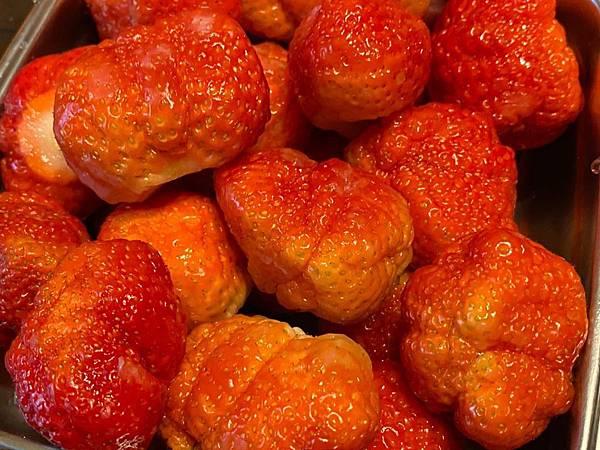 20191227阿根採草莓 (3).jpg