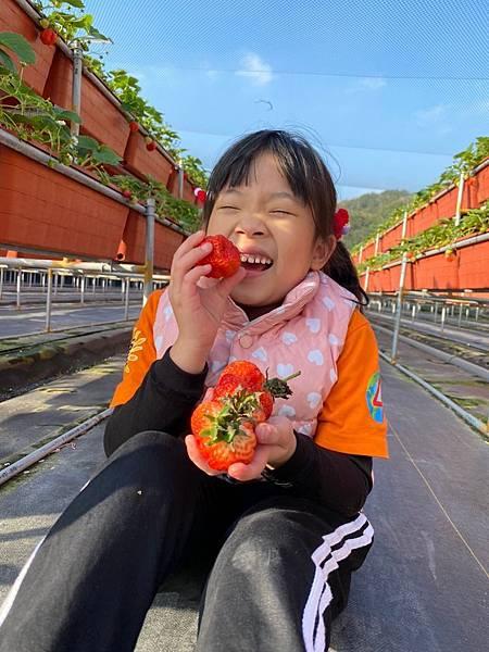 20191227阿根採草莓 (17).jpg