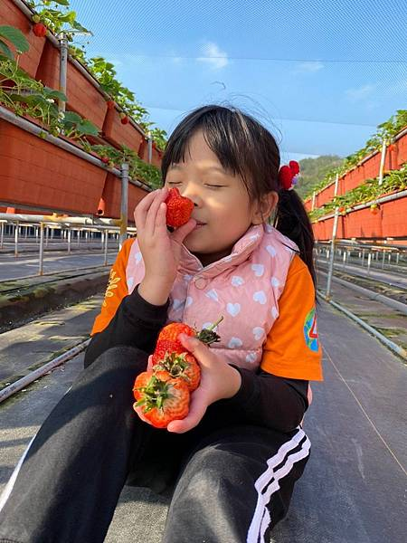 20191227阿根採草莓 (18).jpg