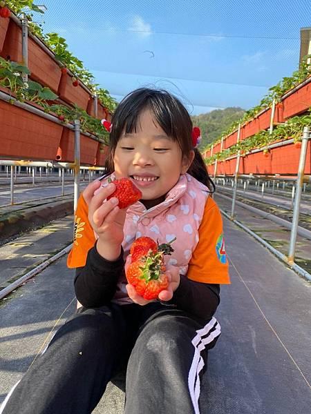 20191227阿根採草莓 (15).jpg