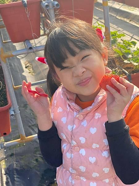 20191227阿根採草莓 (51).jpg
