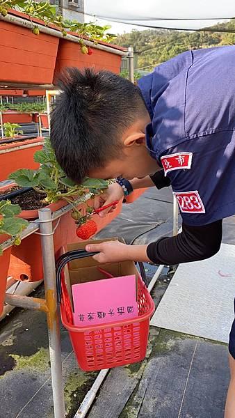 20191227阿根採草莓 (64).jpg