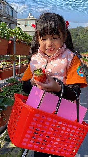 20191227阿根採草莓 (71).jpg