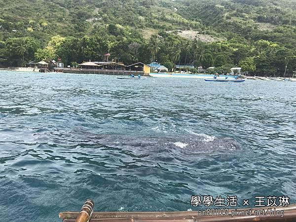 鯨鯊 (2).jpg