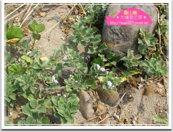 032龜山島植物.jpg