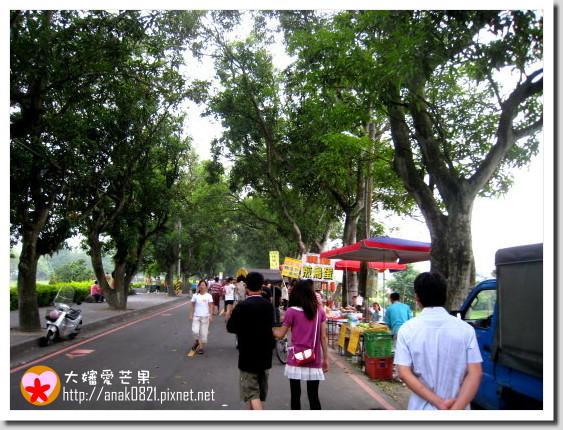 002綠色隧道-2.jpg