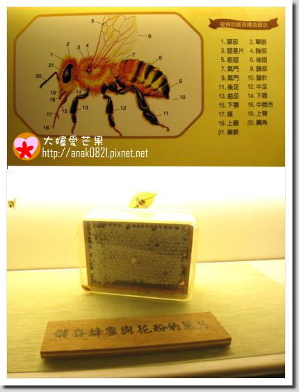 011蜜蜂故事館-4.jpg