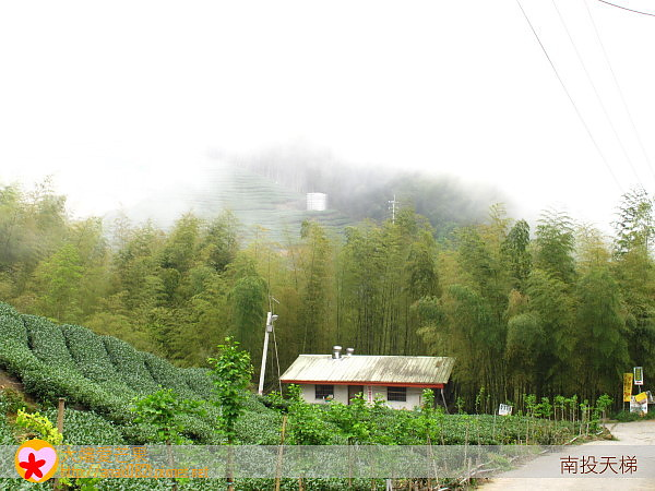 49竹林.jpg