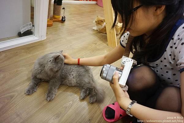 喵喵 給摸嗎