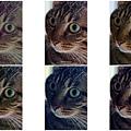DSC08937-cats