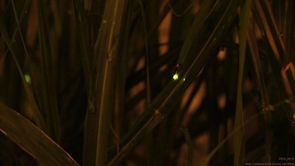 萬綠叢中一點螢