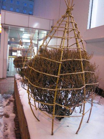 小樽穿不同大衣的行道樹