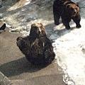 裝可愛的熊