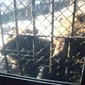 熊就在一牆之外..@o@