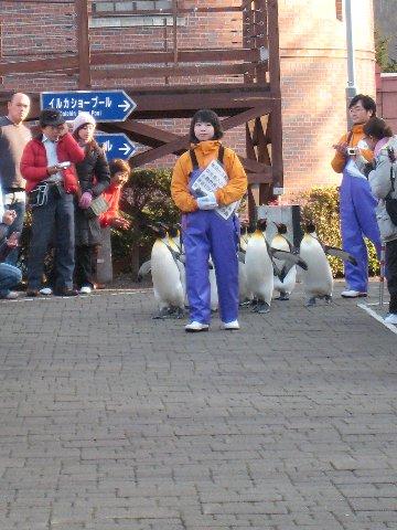 企鵝遊行來了唷!
