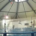 海豚表演...我們來太晚了...沒看到啥~