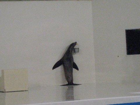 被罰站的海獅