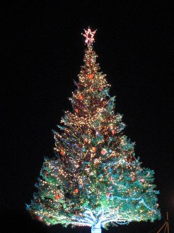 完成點燈的聖誕樹