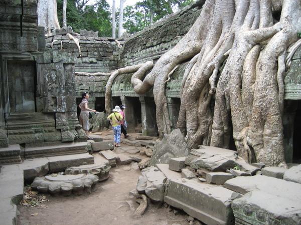 壯觀的巨木