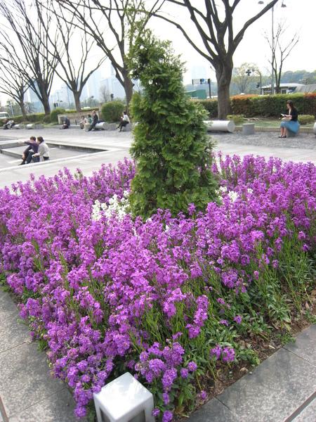 乍然的砣紫,似乎預告春天的降臨