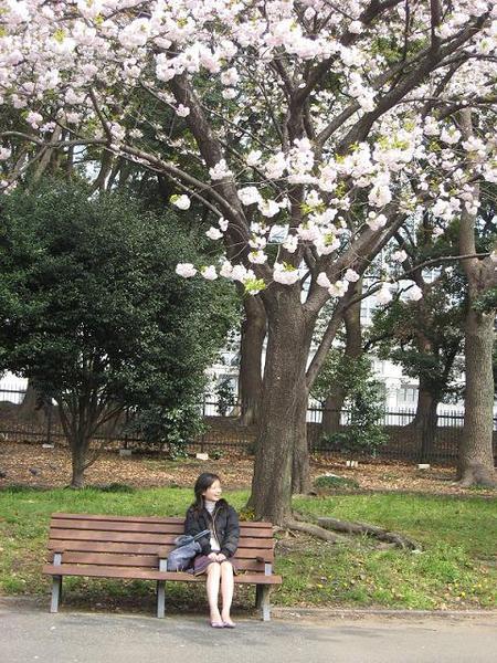 櫻花樹下休憩的我