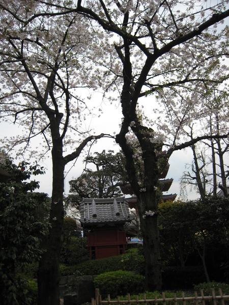 淺草寺外的庭院