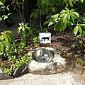 Butchart Gardens裡到處都有這種讓狗狗喝水的地方喔~真是人性化~