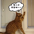 Momo opens window 5.jpg