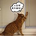 Momo opens window 4.jpg