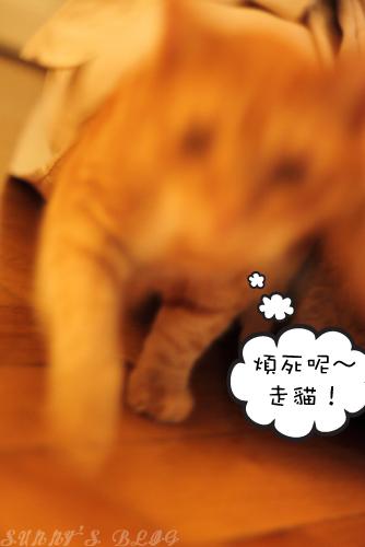 Momo 4.jpg