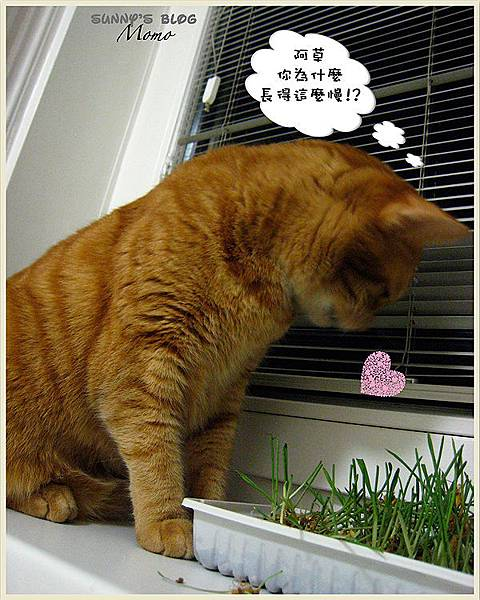 Momo and the catnip 1.jpg