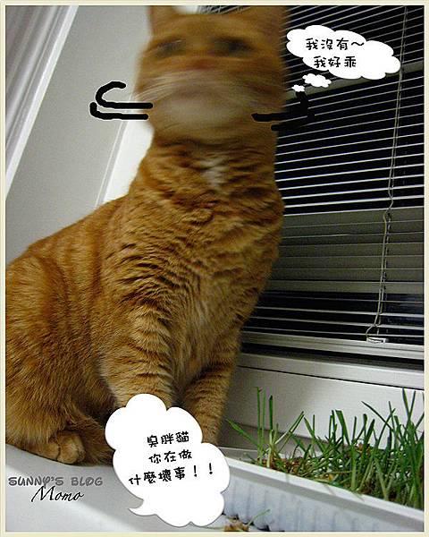 Momo and the catnip3.jpg