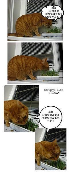Momo and catnip4.jpg
