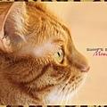 Momo Profile.jpg