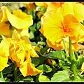 Der Frühling8.jpg