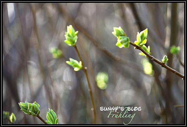 Der Frühling16.jpg