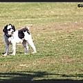 Der Hund1.jpg