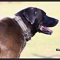 Der Hund2.jpg