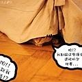 Momo 2.jpg