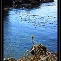 Limekiln Pt State Park 5.jpg