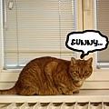 Momo opens window 1.jpg