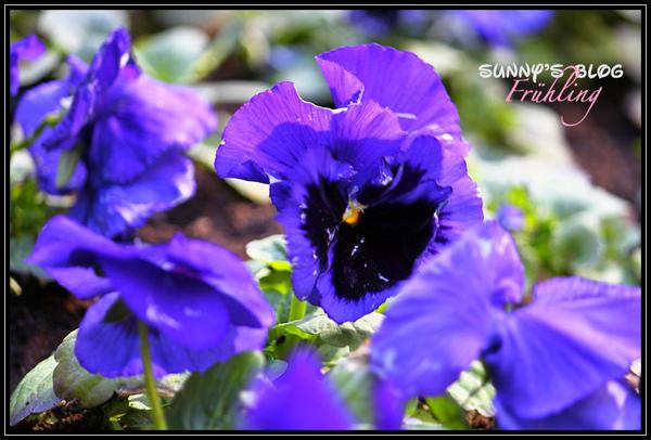Der Frühling2.jpg