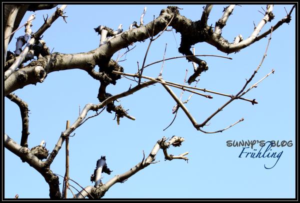 Der Frühling7.jpg