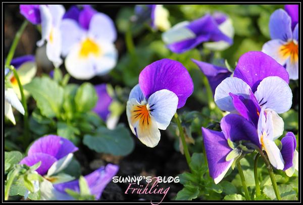 Der Frühling11.jpg