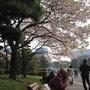 櫻花樹下恬靜的時光,即使是流浪漢也享受這盛放的季節