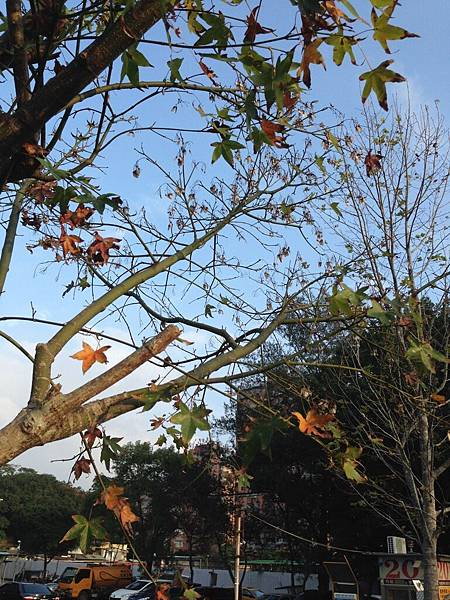 秋在生活的角落-葛喬源-3.jpg