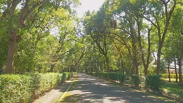 9綠林小徑(南澳原生植物園).jpg
