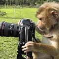 猴拍.jpg